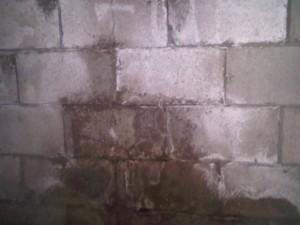 Damp Basement Wall