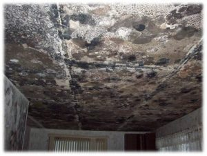mold remediation services - everdry waterproofing