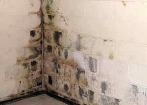 according to the epa the key to mold control is moisture control molds